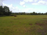The field off Brinsea Rd where Barratts want to build 80 houses.