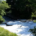 River Yeo polluted with detergent at Congresbury Weir