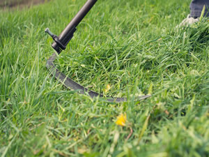 Scything Training Day, Saturday 26 July 2014